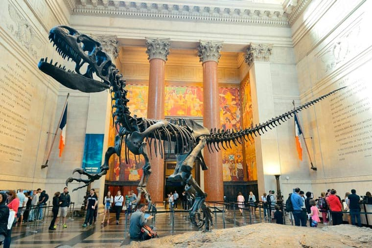 museo storia naturale new york